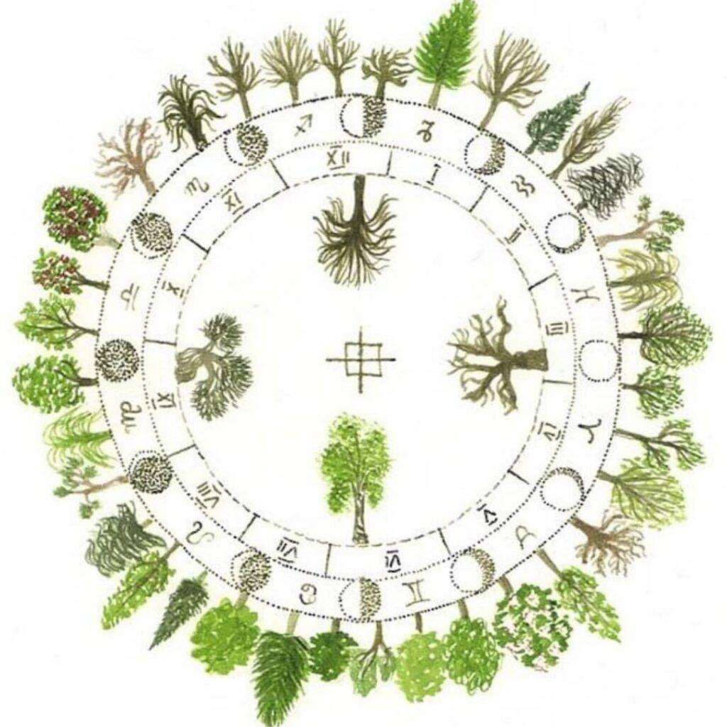 el horoscopo celta