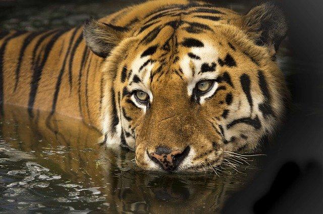 piedras ojo de tigre